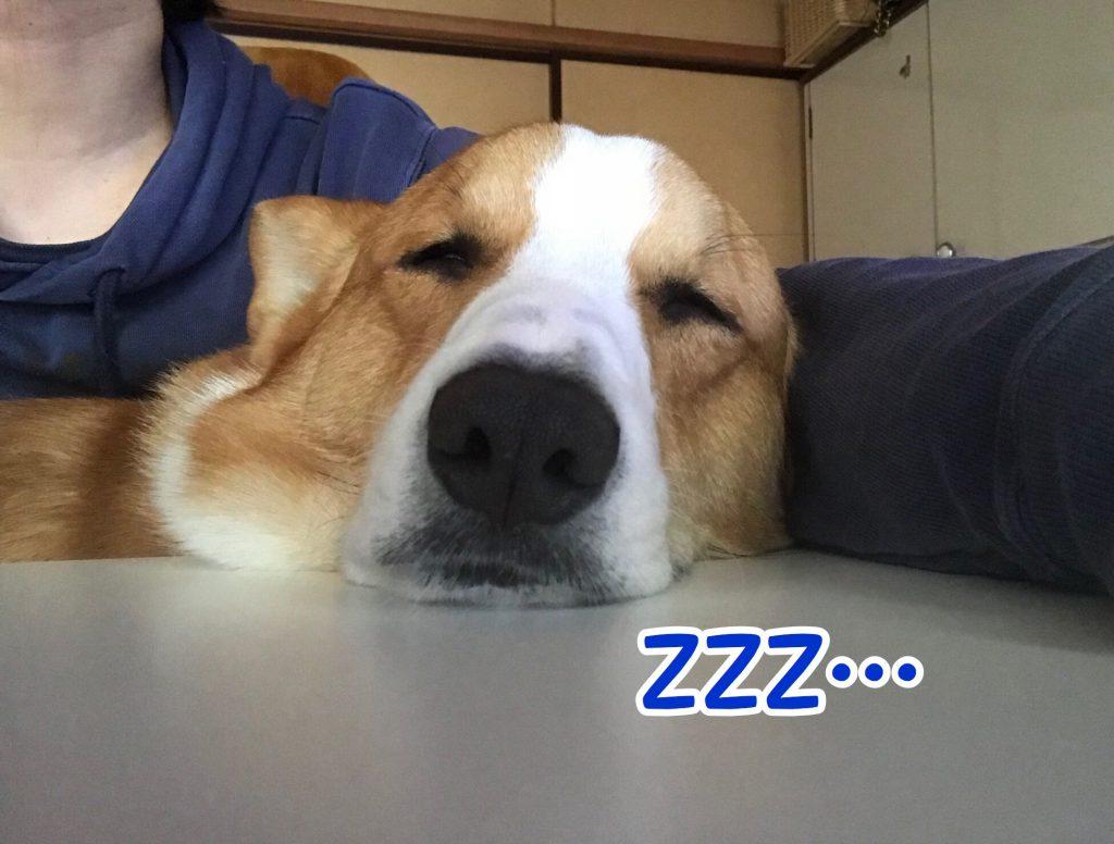 寝ちゃいました
