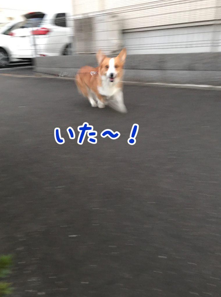 いタァ〜!!