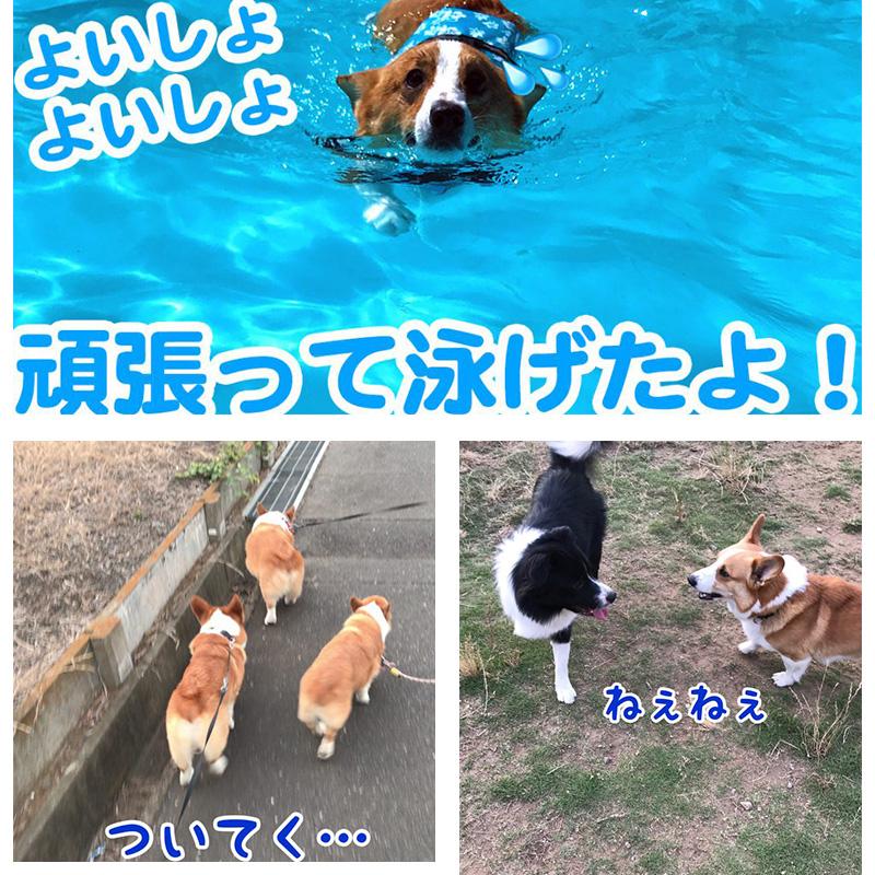 プールで泳げるようにもなりました