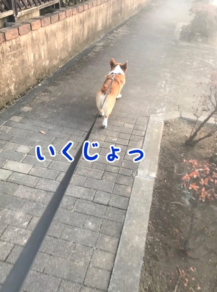 お散歩行くじょ