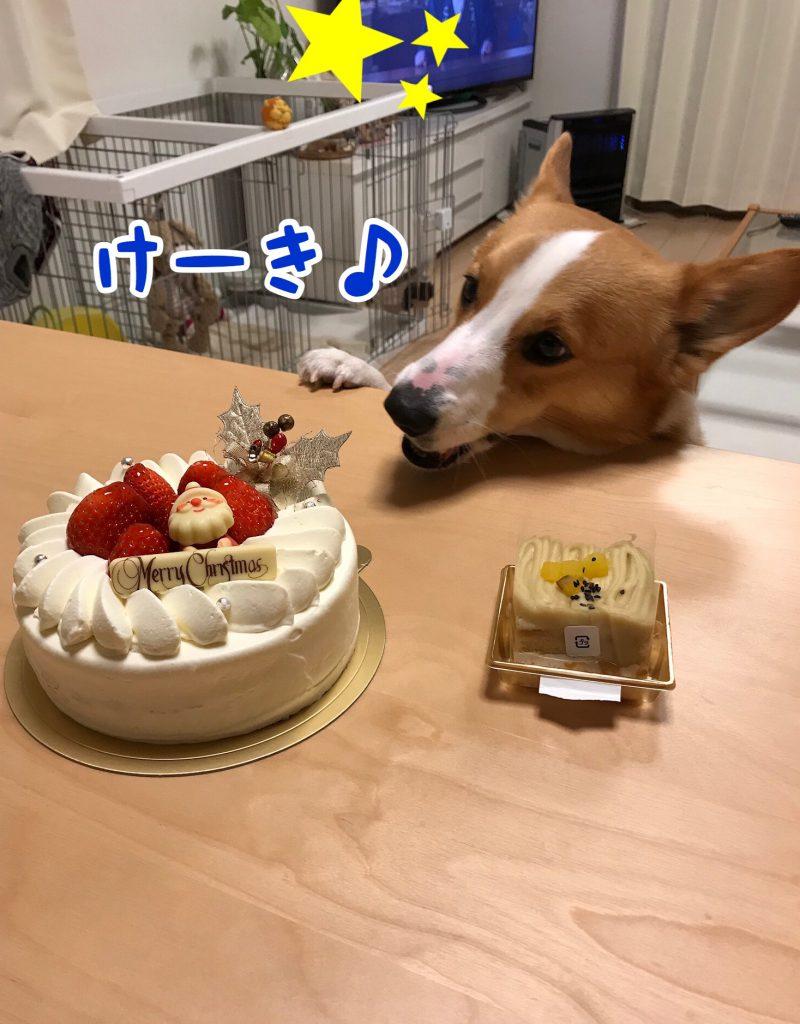 ケーキだ!
