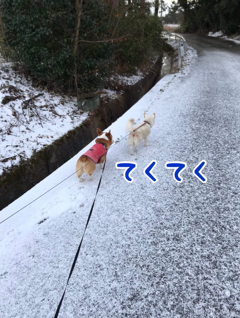 お散歩テクテク