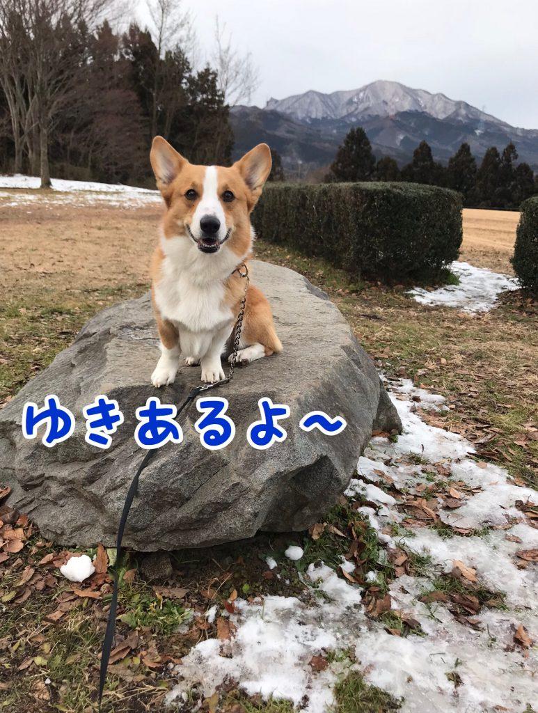 雪あるよ〜