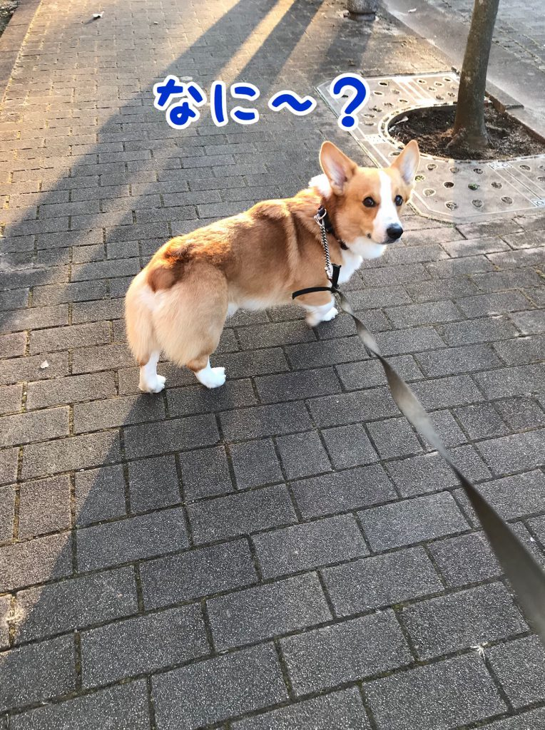 なぁに?僕のこと呼んだ?