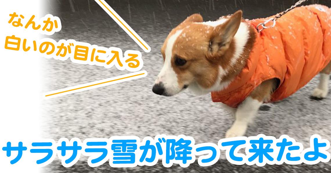 サラサラ雪が降って来たよ
