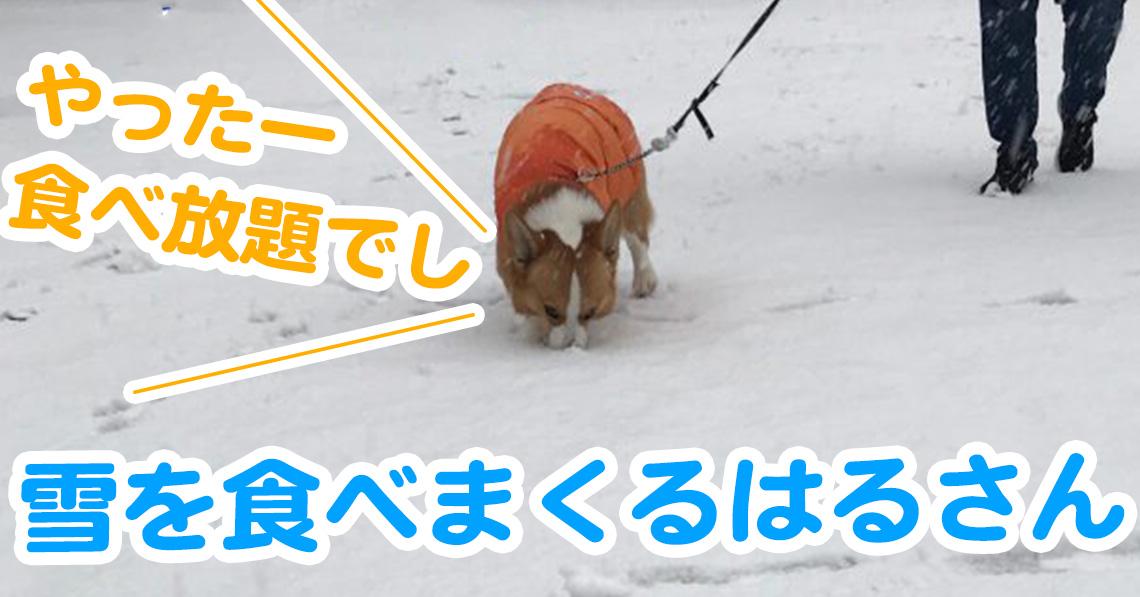 雪を食べまくるはるさん