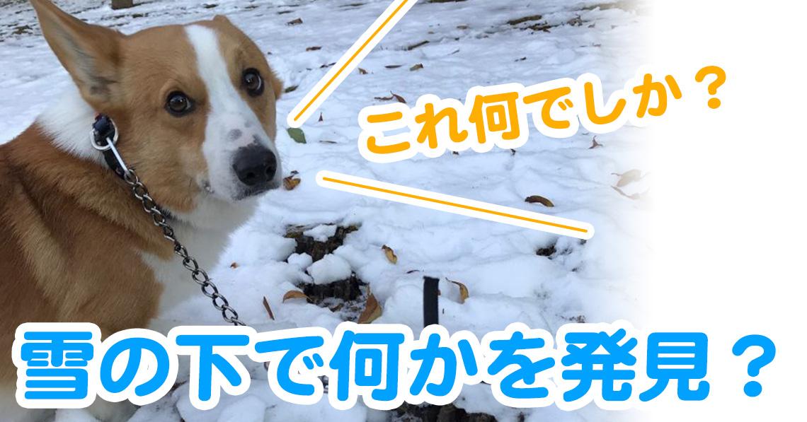 雪の下で何かを発見したはるさん