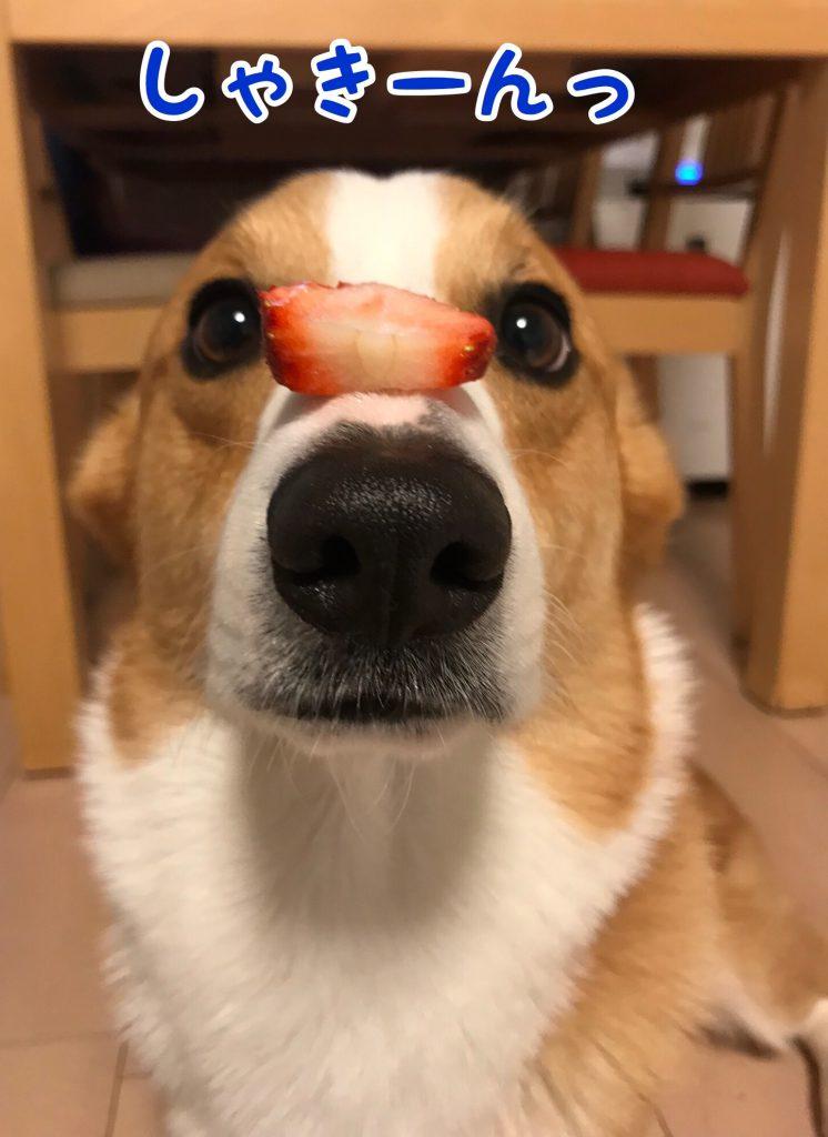 苺のせのせ