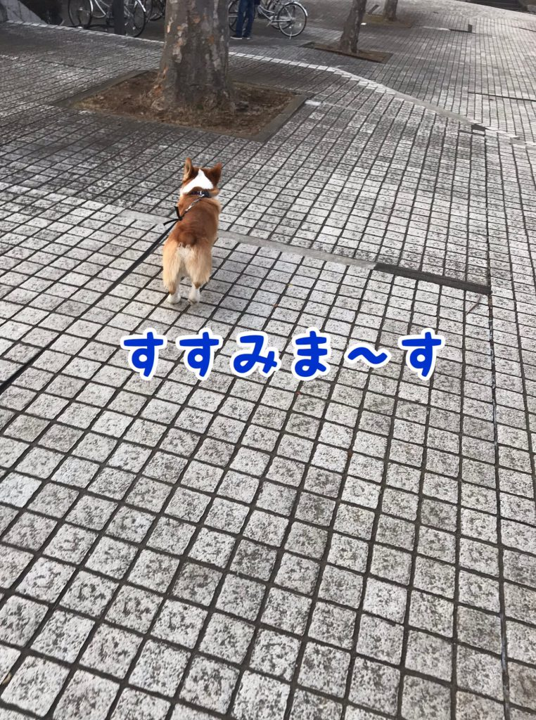 進みま〜す!