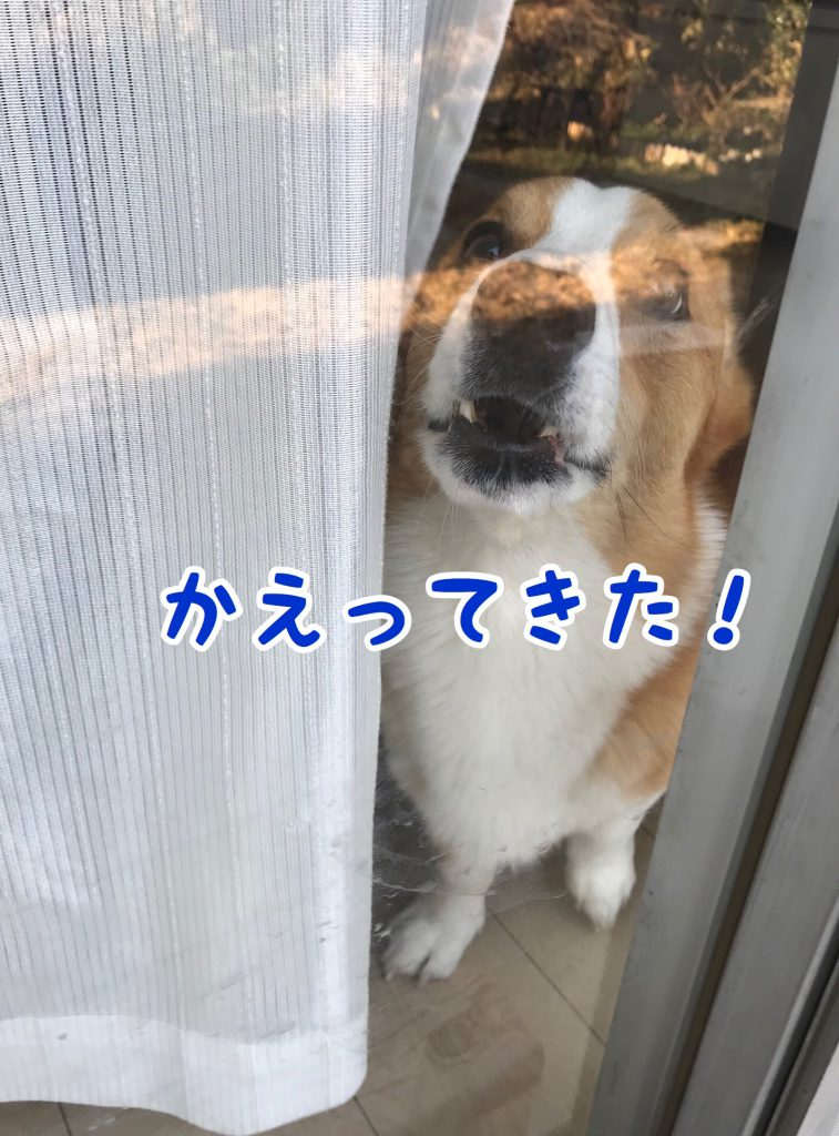 帰ってきたじょ!