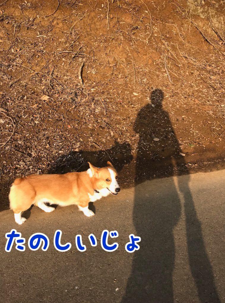お散歩楽しいね。