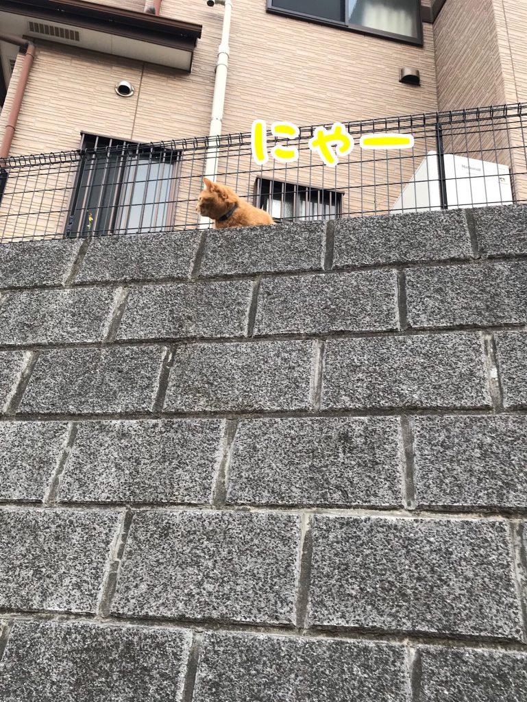 猫さん発見