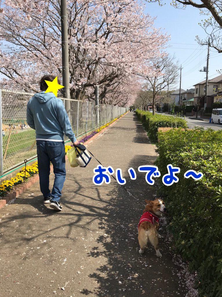 はるとお花見2018第3弾