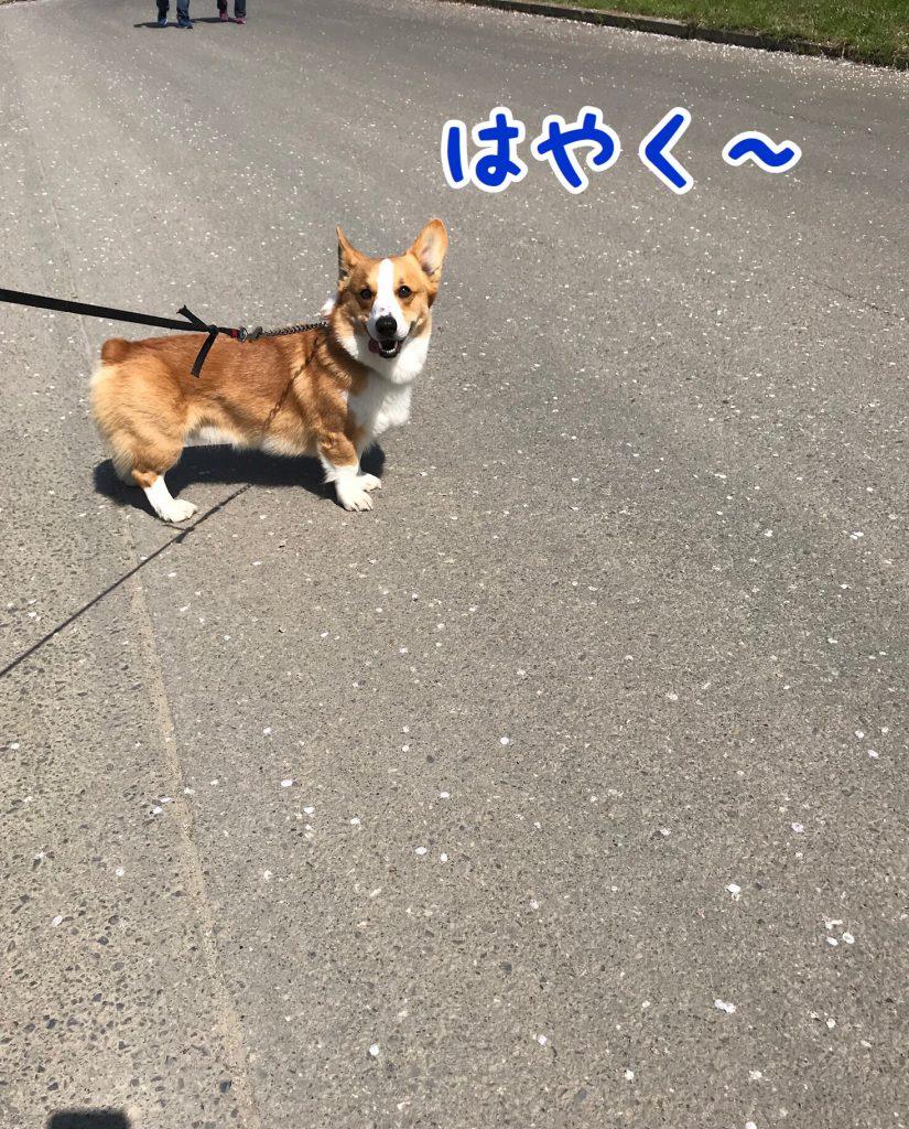 はるとお花見2018第2弾