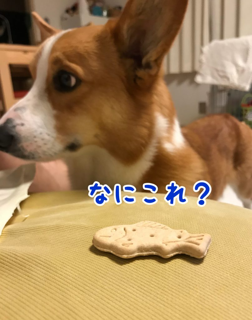 はるの食べたいのはおさかな?