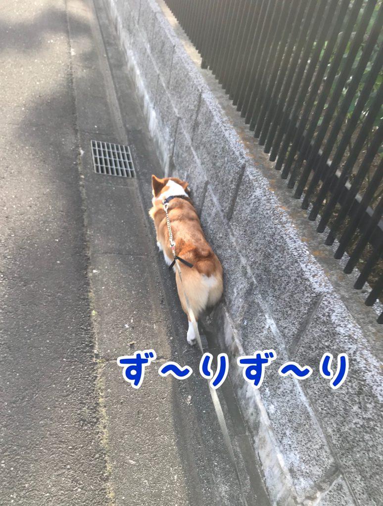 はるって犬ですよね!?