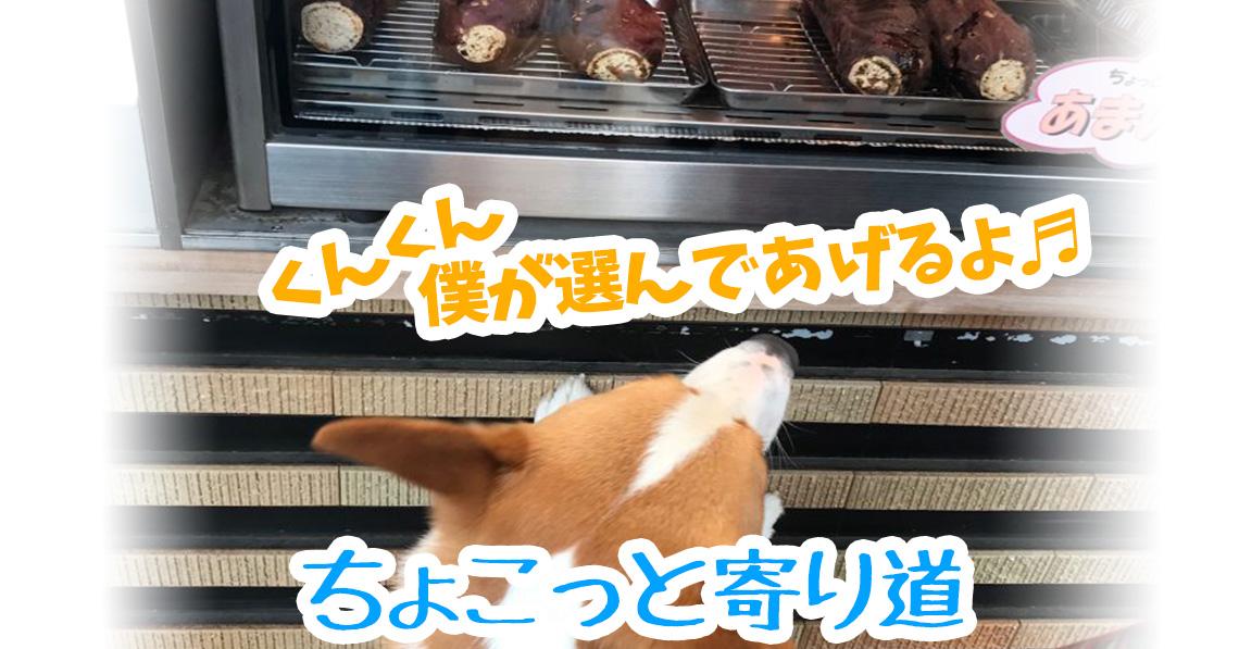焼き芋大好きコーギー