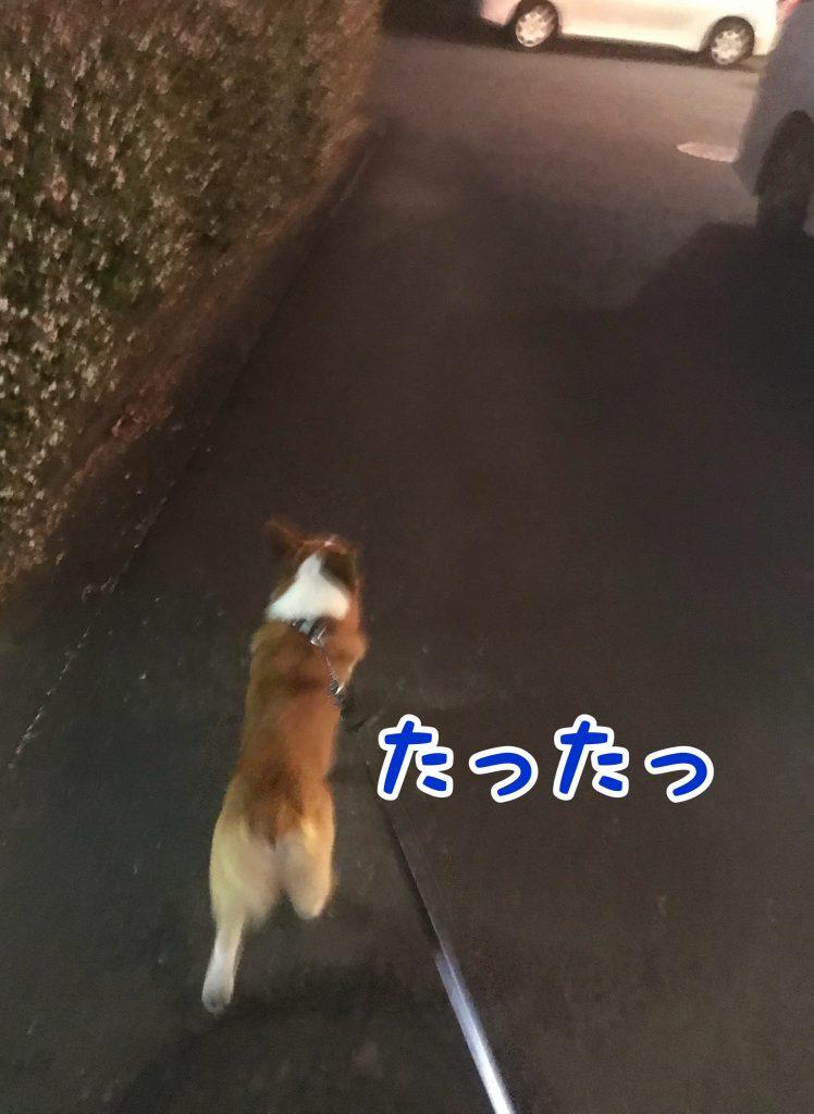 はるお散歩中に遭遇!!