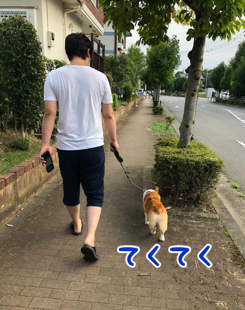 はるとのんびり散歩♪