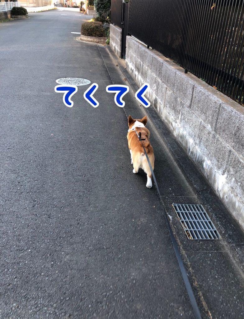 はるさむ〜いお散歩