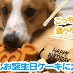 はるさんお誕生日ケーキに大興奮!