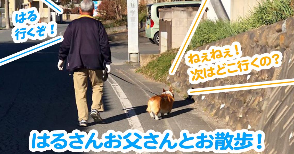 はるさんお父さんとお散歩!