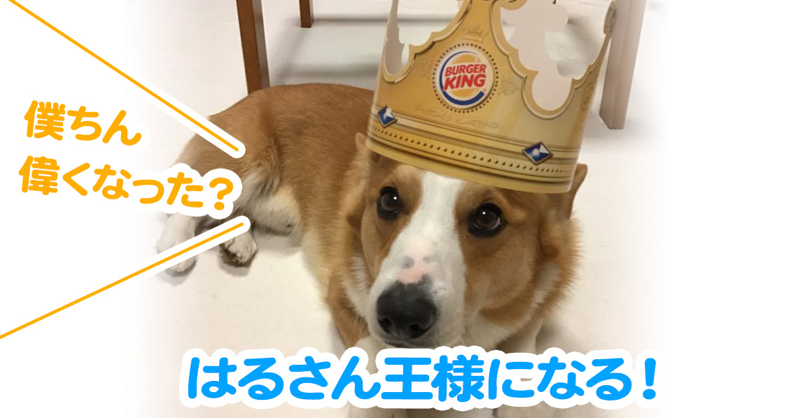 はるさん王様になる!