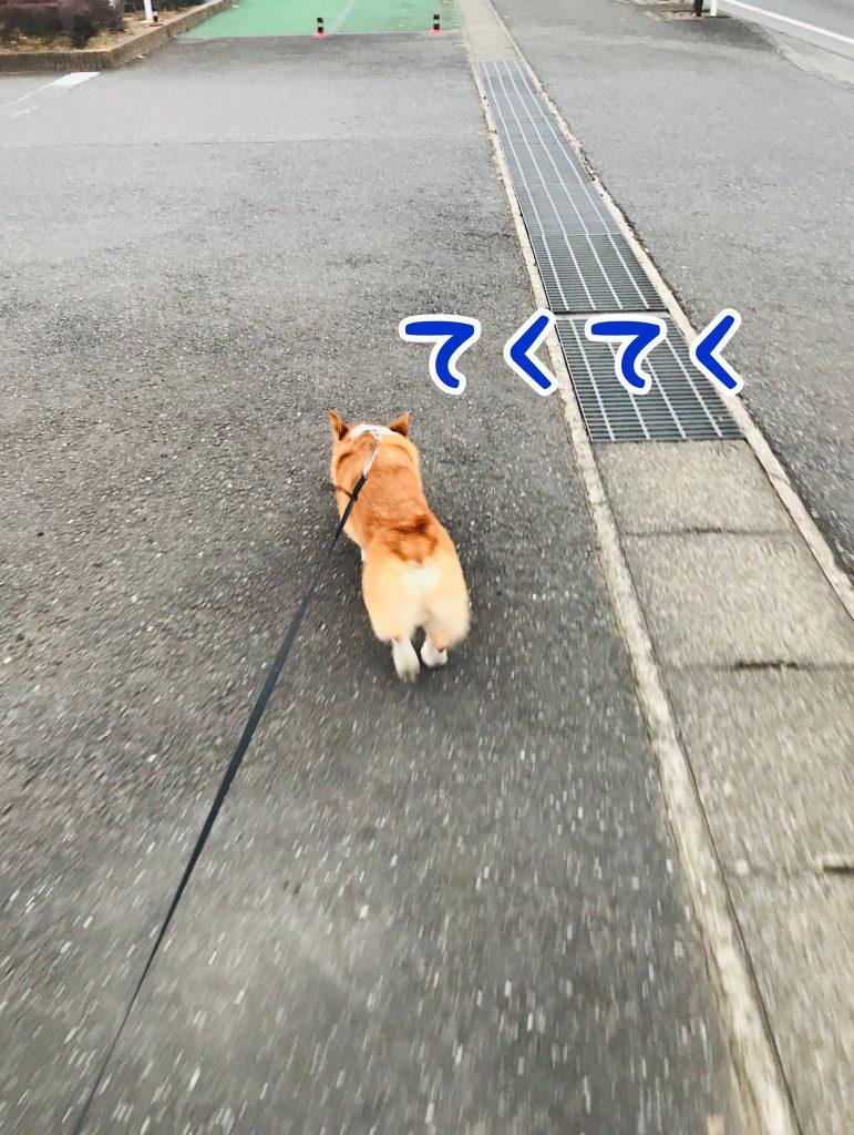 はる久々!先輩とお散歩!