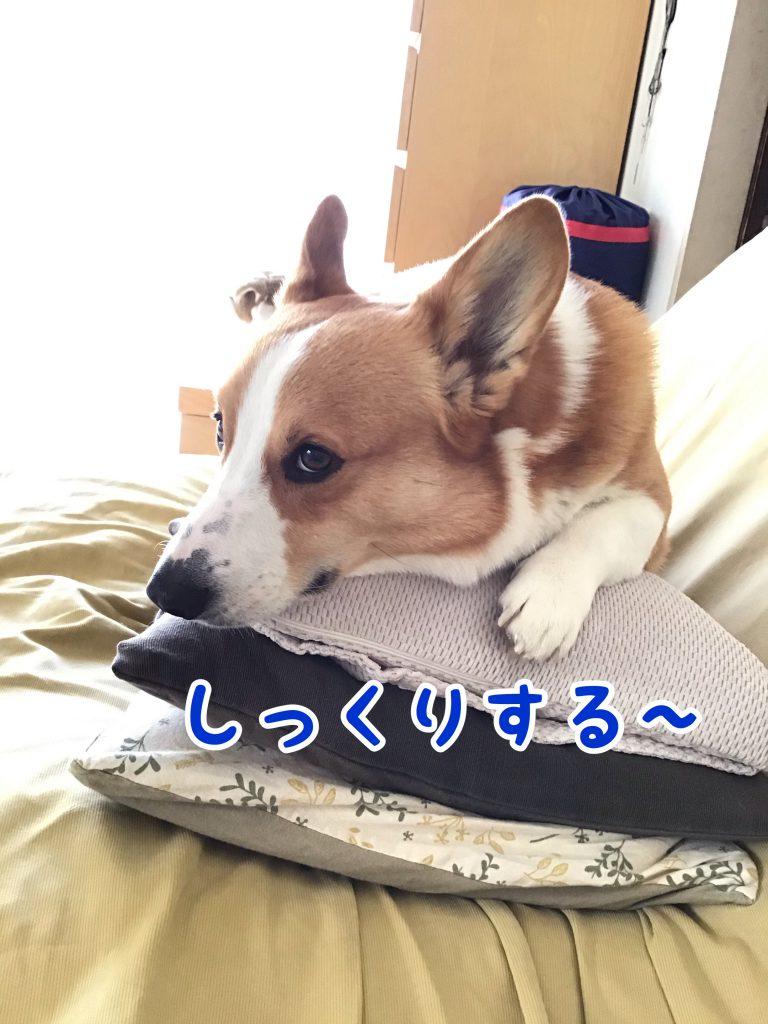 はるの枕?