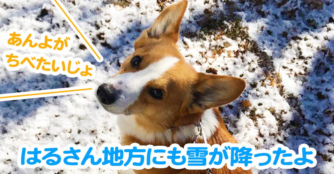 はるさん地方にも雪が降ったよ