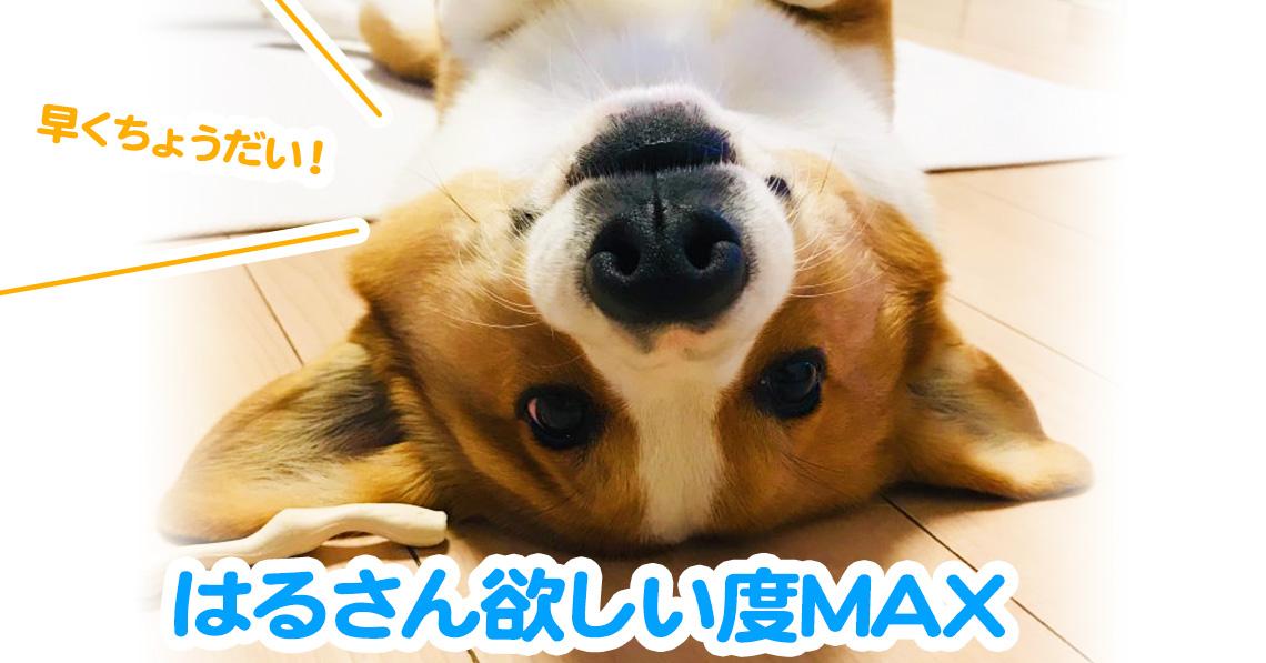 はるさん欲しい度MAX