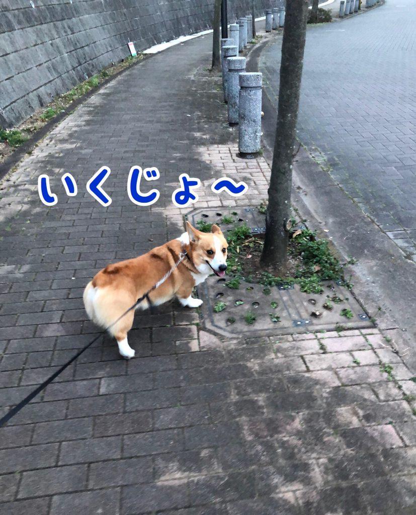 はるお散歩は一緒がいい!