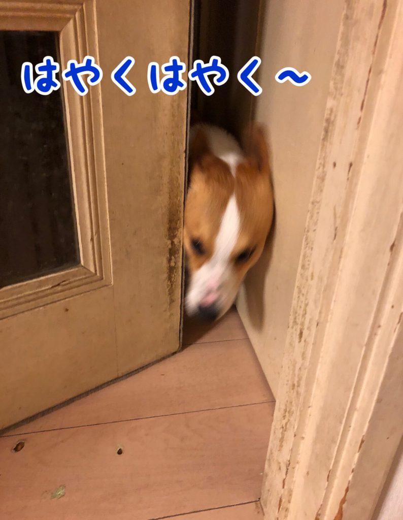 はる戻ってきた〜!