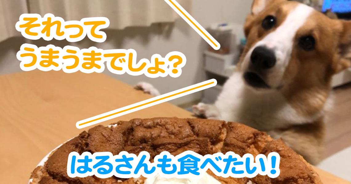 はるさんも食べたい!