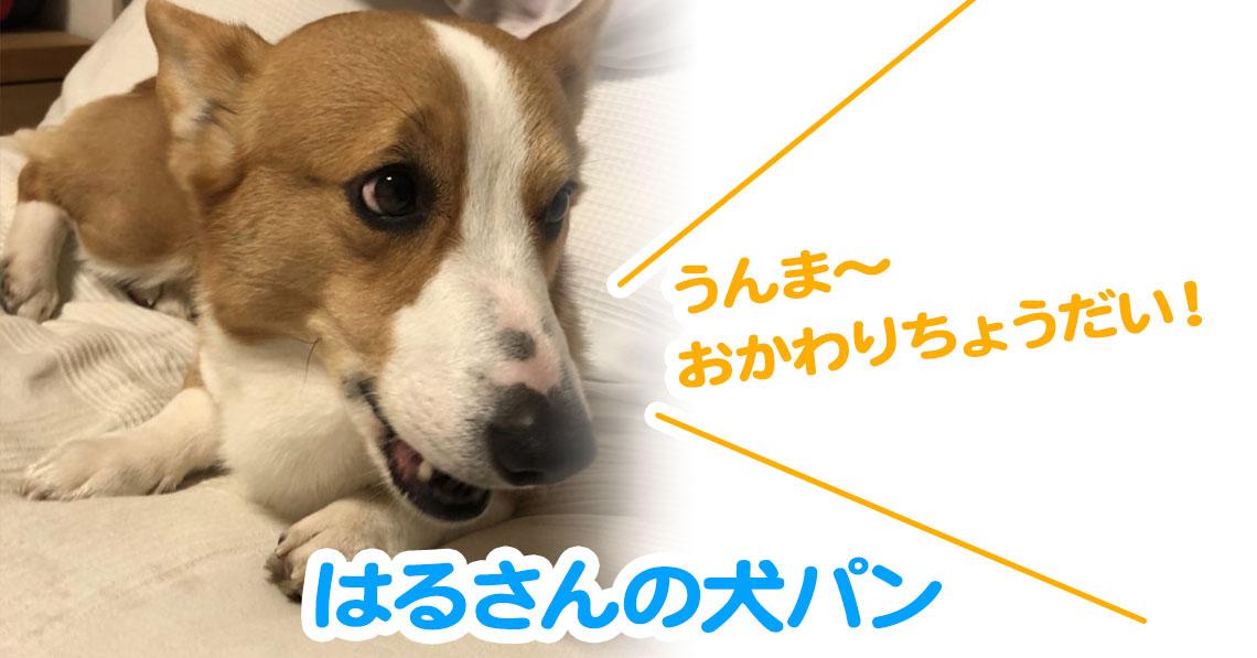 はるさんの犬パン