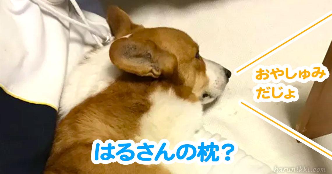 はるさんの枕?