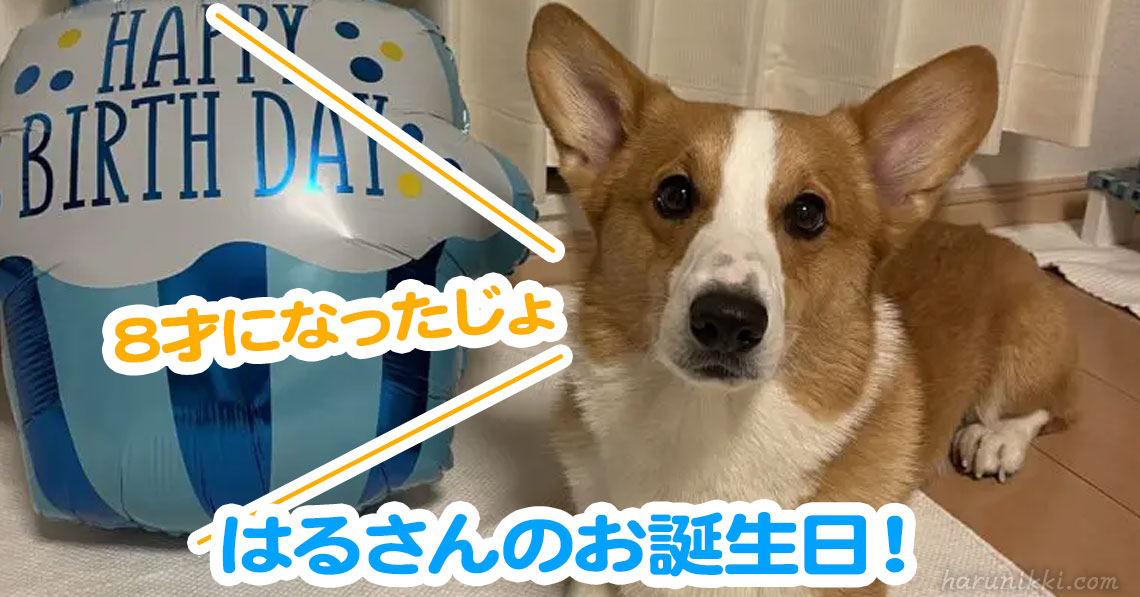 はるさんのお誕生日!
