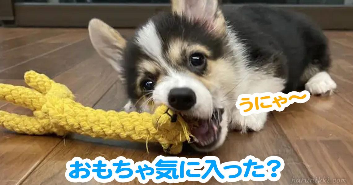 おもちゃ気に入った?