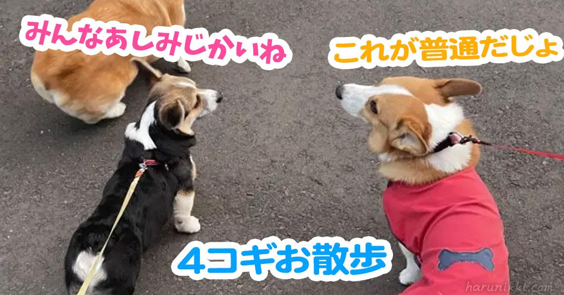 4コギお散歩